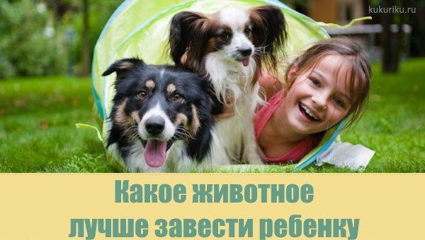 Какое животное лучше завести ребенку?