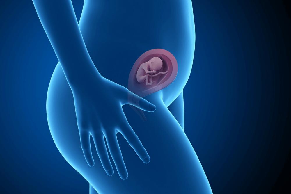 Плод на 16-й неделе беременности