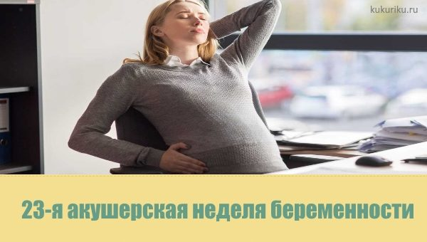 23 неделя беременности